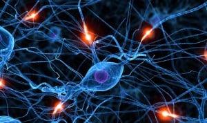 Las neuronas 'conversan' entre ellas para controlar el movimiento