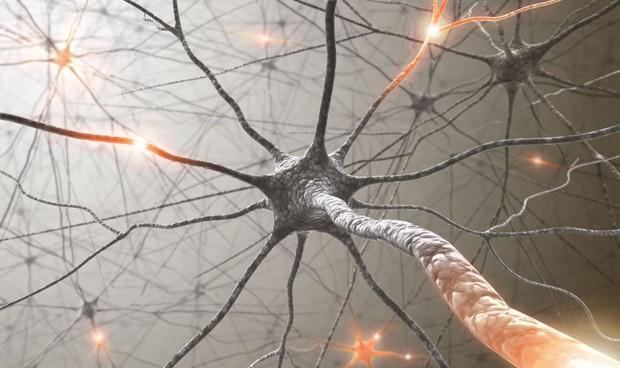 Las neuronas se especializan en tipos de dolor concretos