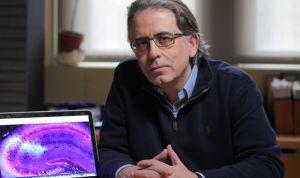 Los fallos en el 'GPS' del cerebro son síntoma de esquizofrenia