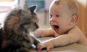 Los gatos previenen el asma en los recién nacidos