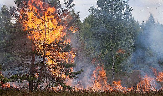 Los incendios también arrasan las células pulmonares