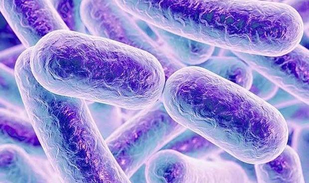 Los niños con autismo tienen una microbiota intestinal distinta