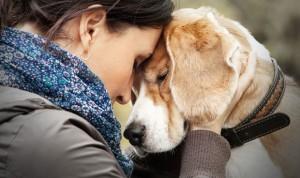 Los tratamientos oncológicos del futuro se prueban en perros