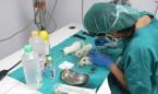 Medicina supera en investigación a todas las otras áreas de sanidad juntas