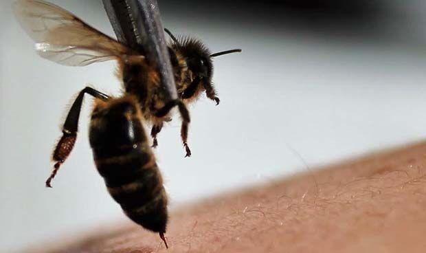 Muere una española por una pseudoterapia basada en picaduras de abeja