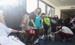 Pacientes de Quirónsalud Málaga reciben a perros terapéuticos en Nochebuena