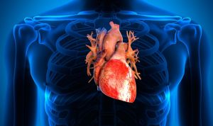 Primeros trasplantes de corazón de donantes con hepatitis C en España