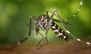 Sanidad activa la red de vigilancia contra el transmisor del zika