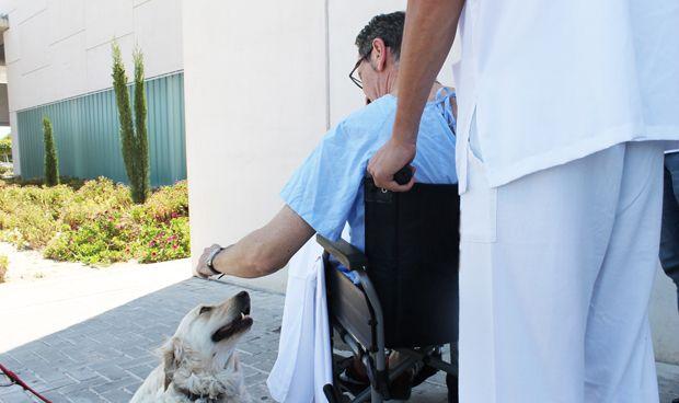 Torrevieja y Vinalopó permiten a los pacientes la visita de sus mascotas