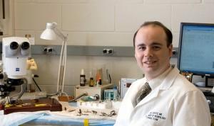 Tratar con células madre el accidente cardiovascular es seguro