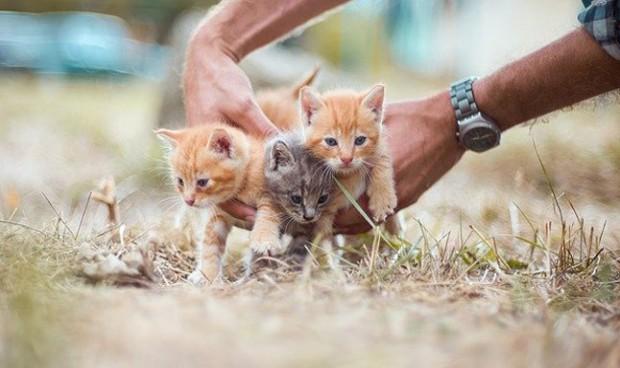 Un antiviral usado en gatos puede funcionar contra el Covid-19 en humanos