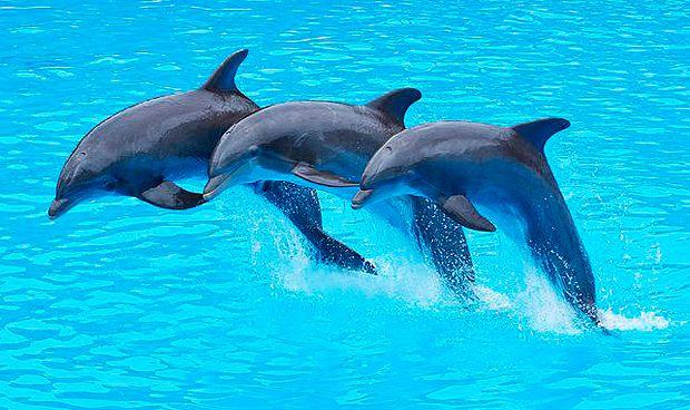 Un estudio demuestra que los delfines tambi�n padecen alzh�imer