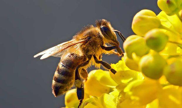 Un falso médico, denunciado por tratar a pacientes con veneno de abejas