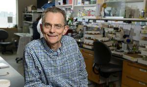 Un fármaco en fase experimental logra frenar el párkinson en ratones