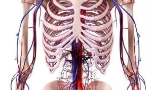 Un filtro en la vena cava reduce la mortalidad en enfermedad tromboembólica