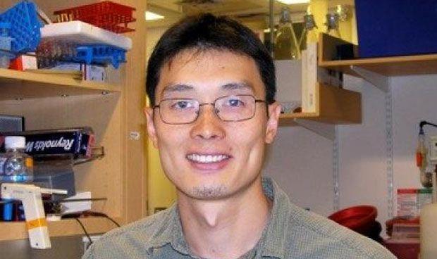 Un mecanismo clave en el desarrollo de la piel mejora los injertos