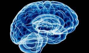 Un menor volumen cerebral puede predisponer a beber más alcohol