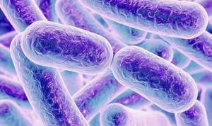 Una bacteria 'neutraliza' los daños de los alimentos procesados