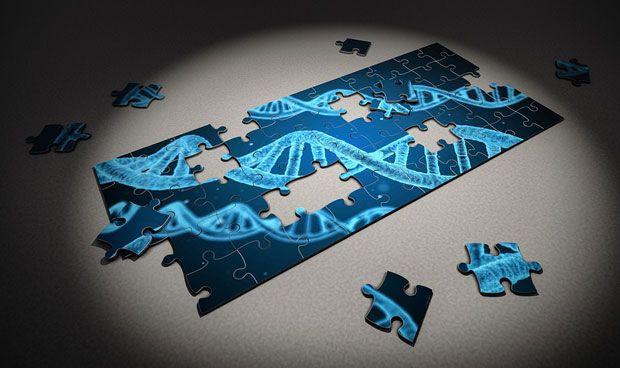 Una proteína provoca las mutaciones en linfocitos que dan lugar a linfomas