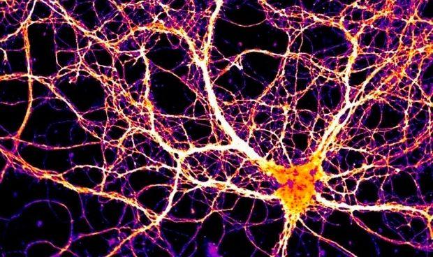 Una proteína similar a un virus actúa igual en la cognición y la memoria
