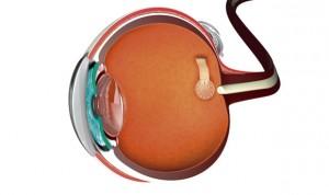 Una prótesis electrónica es capaz de devolver la visión parcial a ciegos