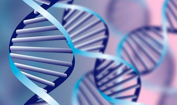 Una terapia génica protege al corazón frente a la quimioterapia