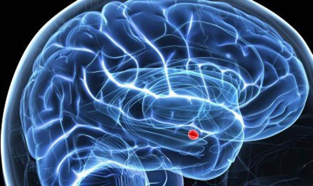 Una zona de la am�gdala cerebral, responsable del rechazo del sabor t�xico