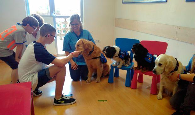 Vall d'Hebron, pionero en tratar el síndrome alcohólico fetal con perros