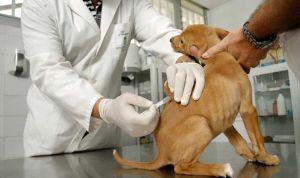 Veterinaria avisa a otros sanitarios: los antivacunas llegan a las mascotas