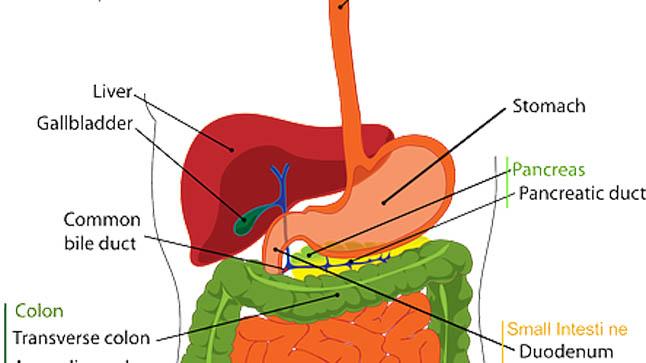 Causas, síntomas y tratamiento de los insulinomas