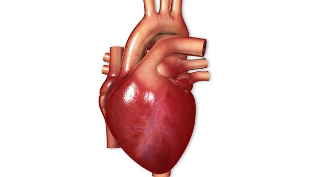 ¿Cómo se diagnostica la miocardiopatía restrictiva?
