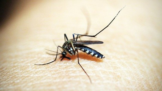 ¿Cuál es su pronóstico del paludismo?