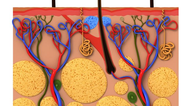¿Cómo se diagnostica la poliangeitis microscópica?