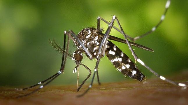 Cómo actuar ante las picaduras de insecto.