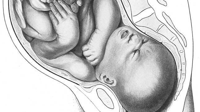 Los movimiento fetales