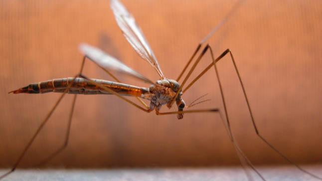 ¿Cómo se diagnostica a los niños con infección por virus Zika?